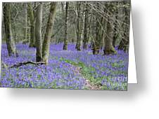 Bluebell Wood Effingham Surrey Uk Greeting Card