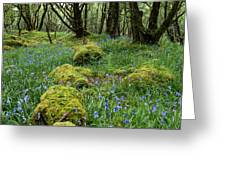 Bluebell Woods Greeting Card