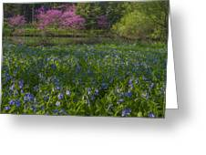 Bluebells And Redbuds Greeting Card