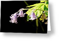 Bluebells Under The Sun Ray. Greeting Card