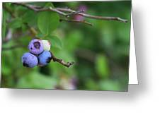 Blueberries On The Vine 4 Greeting Card