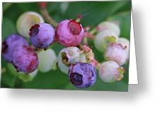 Blueberries On The Vine 5 Greeting Card