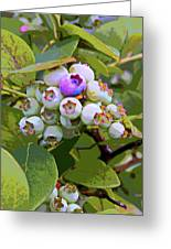 Blueberries On The Vine 7 Greeting Card