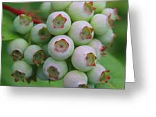 Blueberries On The Vine 9 Greeting Card