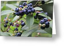Blueberry Bounty Greeting Card