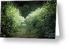 Blueberry Bushes Greeting Card