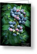 Blueberry Cluster Greeting Card
