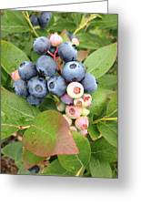 Blueberry Group Greeting Card