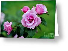 Blueberry Hill Roses Greeting Card