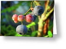 Blueberry Morning Greeting Card
