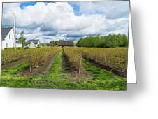 Blueberry Rows Greeting Card