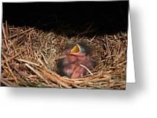 Bluebird Babies Greeting Card