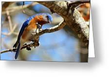 Bluebird Curiousity Greeting Card