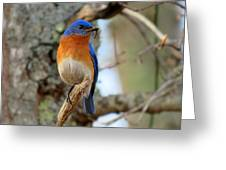 Bluebird Dad Greeting Card