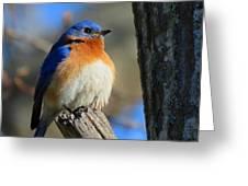 Bluebird Evening Greeting Card