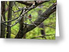 Bluebird In A Tree Greeting Card