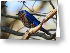 Bluebird In May Greeting Card