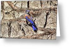 Bluebird On Canary Island Palm II Greeting Card