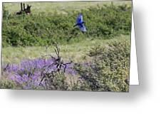 Bluebird Pair In Blickleton Greeting Card