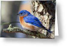 Bluebird Vibrance Greeting Card