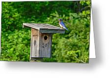 Bluebird With Grub Greeting Card