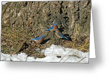 Bluebirds In Spring Greeting Card
