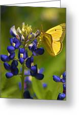 Bluebonnet And Butterfly Greeting Card