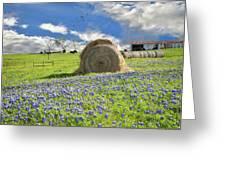 Bluebonnet Bales Greeting Card