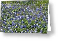Bluebonnet Beauty Greeting Card