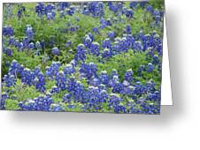 Bluebonnet Bliss Greeting Card