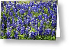 Bluebonnet Blues Greeting Card