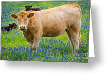 Bluebonnet Cow Greeting Card
