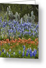 Bluebonnet Paintbrush And Prickly Pear Greeting Card