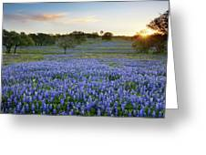 Bluebonnet Sunrise And A Windmill In Texas 1 Greeting Card