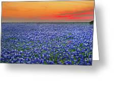 Bluebonnet Sunset Vista - Texas Landscape Greeting Card