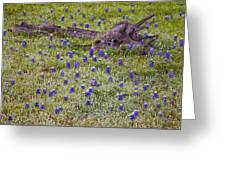 Bluebonnets And Fallen Tree - Texas Hill Country Greeting Card