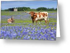 Bluebonnets And Longhorns 4 Greeting Card