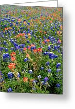 Bluebonnets And Paintbrushes 3 - Texas Greeting Card