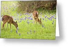 Bluebonnets And Whitetails Greeting Card
