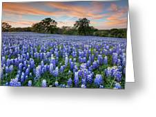 Bluebonnets On A Spring Evening 403-1 Greeting Card