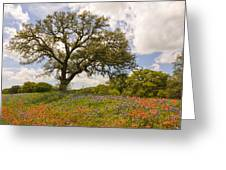 Bluebonnets Paintbrush And An Old Oak Tree - Texas Hill Country Greeting Card