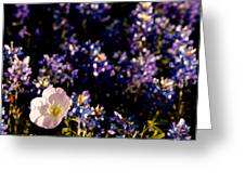 Bluebonnets With Buttercup Greeting Card