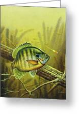 Bluegill And Jig Greeting Card