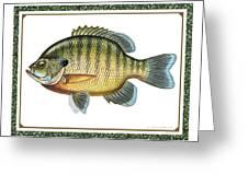 Bluegill Print Greeting Card by JQ Licensing