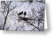 Blueherron Mating Time Greeting Card