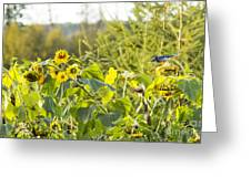 Bluejay And Sunflowers Greeting Card