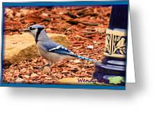 Bluejay Profile Greeting Card