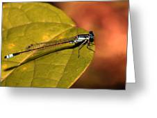 Bluetail At Sunset Greeting Card