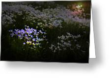 Bluets In Momentary Light Greeting Card