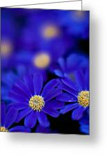 Bluey Gerbera Greeting Card